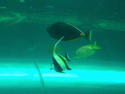 fish, Sydney aquarium