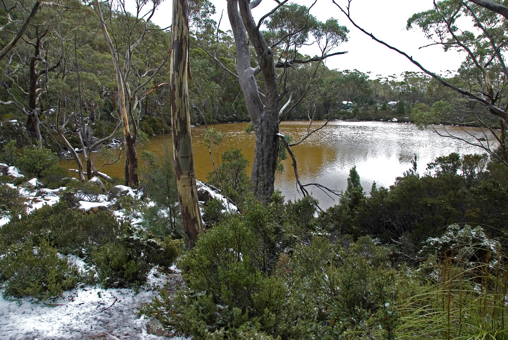 Lake, Mount Field National Park - Tasmania, Australia