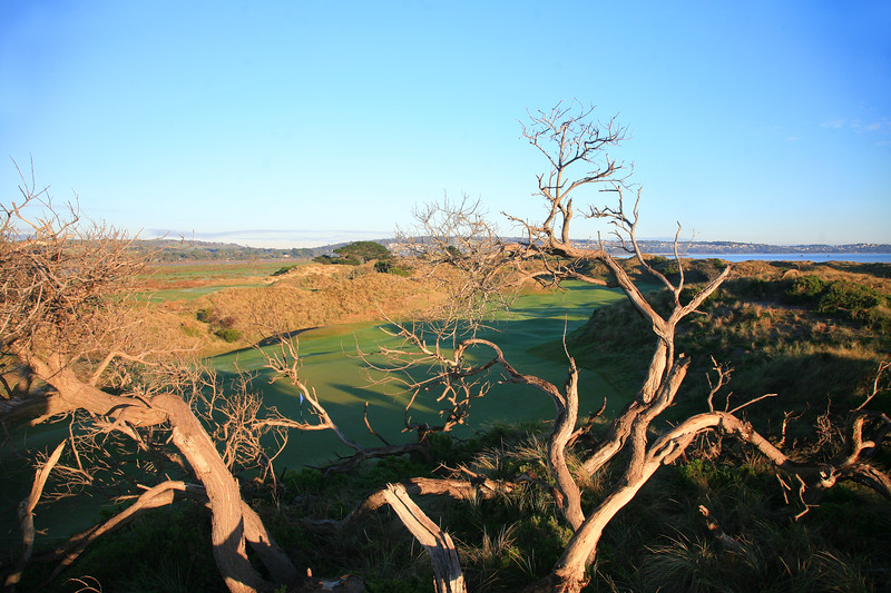 Barnbougle_06BackHighTrees_1262