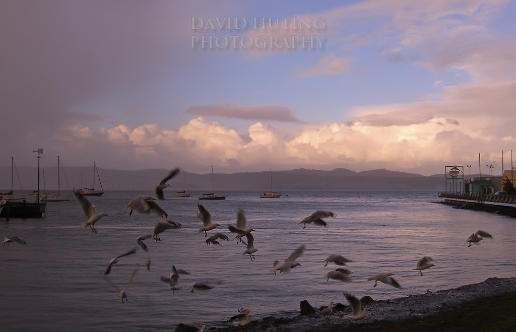 Seagulls Flying at Sunset<br /> Hobart, Tasmania