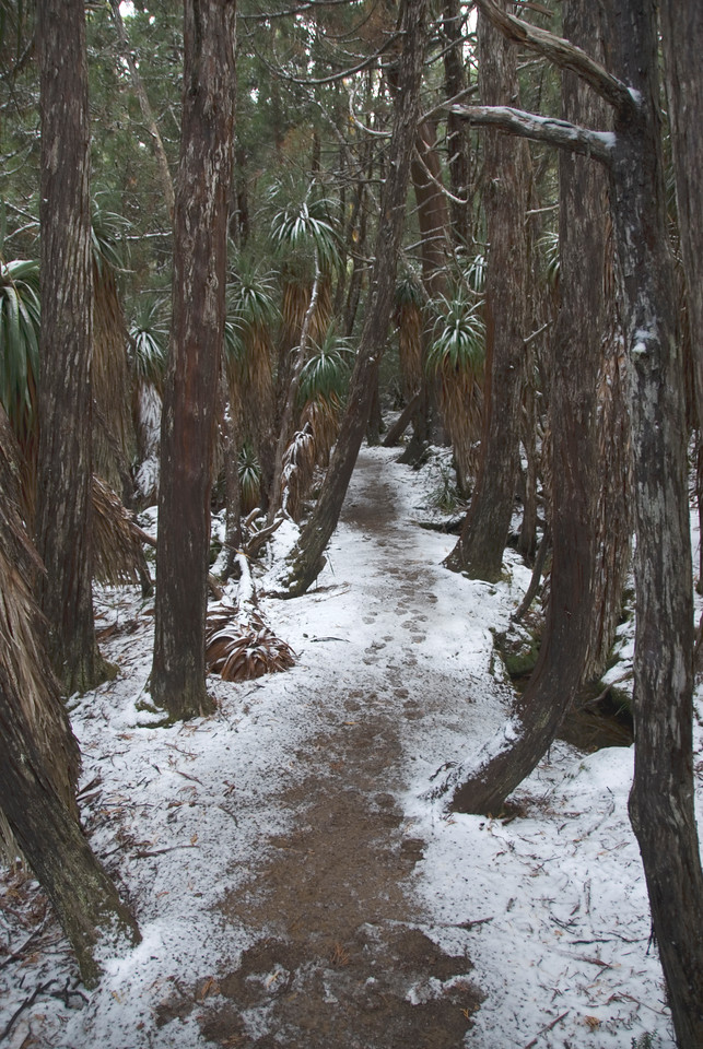 Snowy Path, Mount Field National Park - Tasmania, Australia