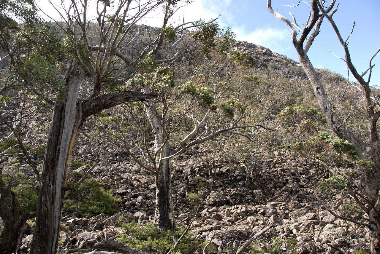 Rubble, Mount Field National Park - Tasmania, Australia