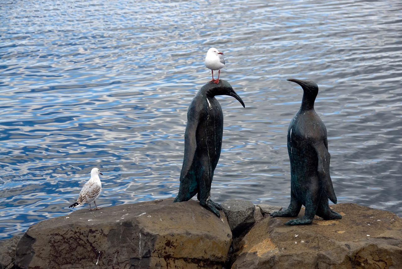 Birds on Penguin Statue - Hobart, Tasmania, Australia