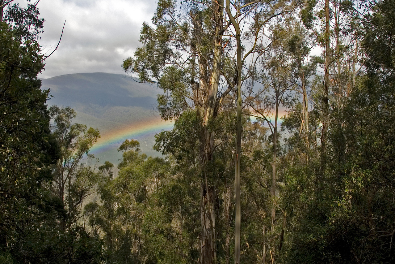 Rainbow, Mount Field National Park - Tasmania, Australia