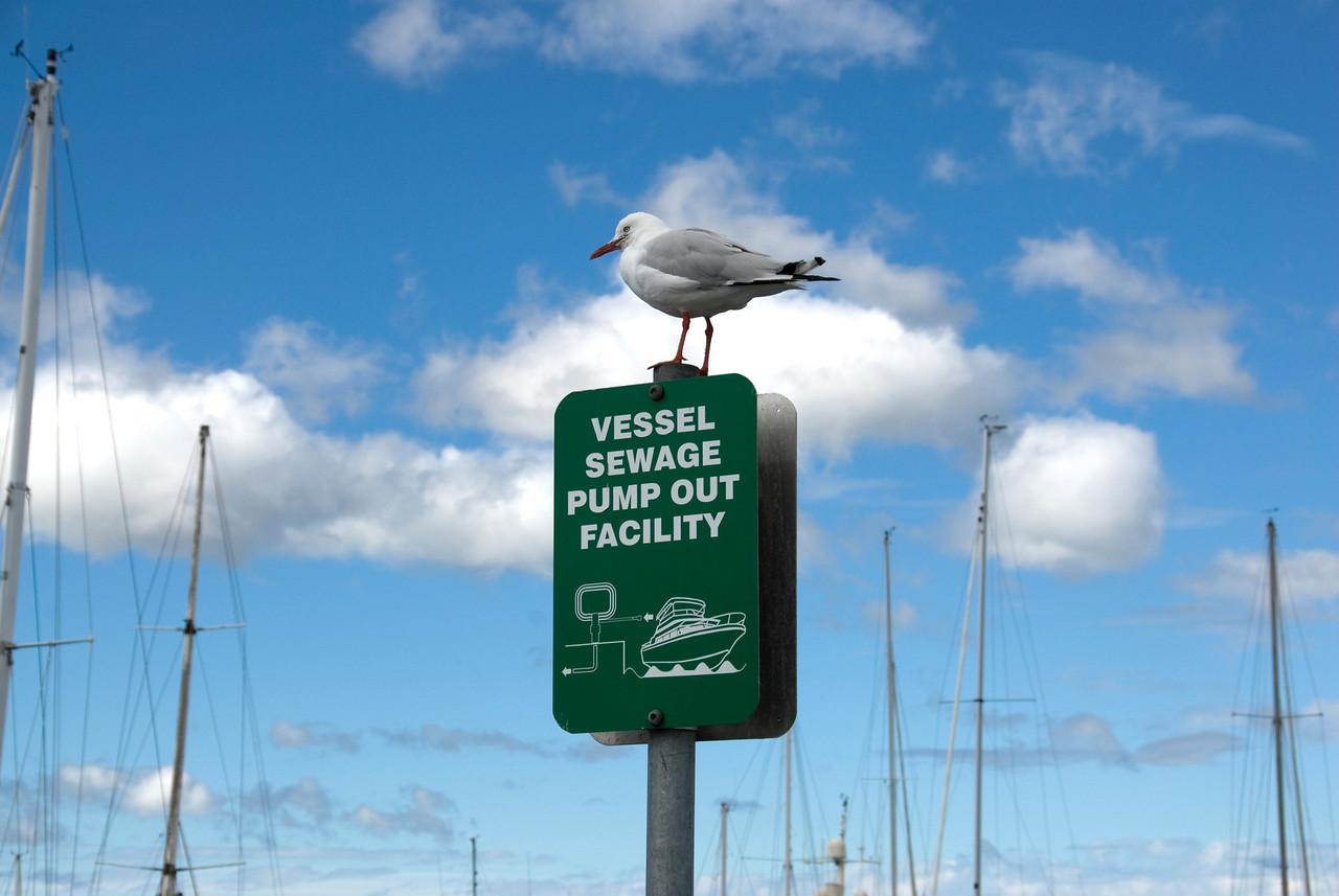 Bird on Sign - Hobart, Tasmania, Australia