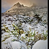 Cradle Mountain <br /> <br /> Deep snow cover all but buried low lying shrubs after a heavy night's snow fall.<br /> <br /> DM_9199
