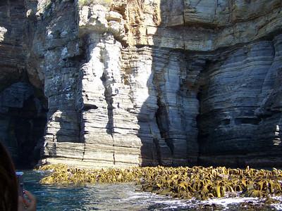 kelp bed, Tasman National Park