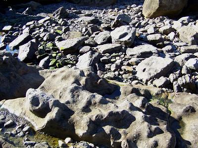rocky shore, Eaglehawk Neck