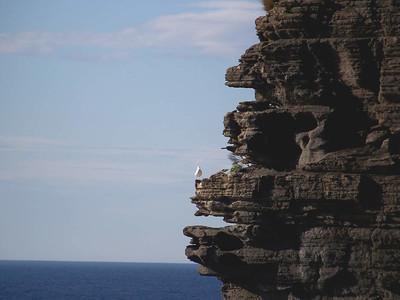 Cliff at Eaglehawk Neck