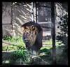 Melbourne zoo trip, sept 2014