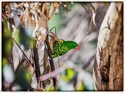 AHealesville Sanctuary Birds n reptiles