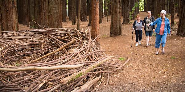 Nu er vi kørt til de store Redwood træer uden for Warburton by