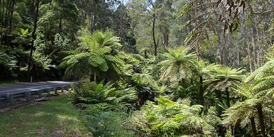 På vej op til Mount Donna Buang regnskov