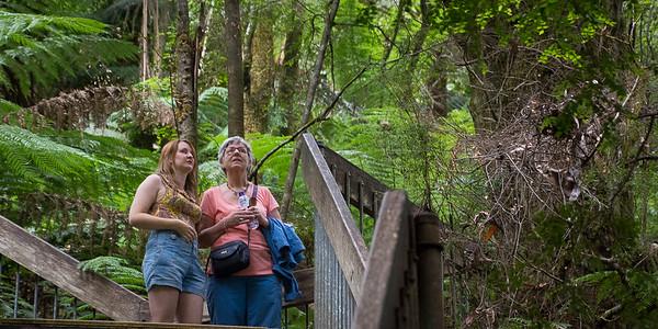 Sarah fortæller om de 65 millioner år gamle bregnetræer.