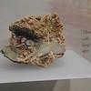 Érme múzeum<br /> <br /> Coin museum