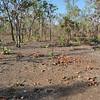 Typical woodland<br /> <br /> Tipikus Kakadu park-i erdősség