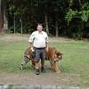 Tiger show<br /> <br /> Tigris bemutató