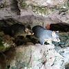 Possums live here in the cave garden<br /> <br /> Posszumok a kert aljában