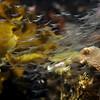 Shrimps - Sydney Aquarium<br /> <br /> Garnélarákok - Sydney Akvárium