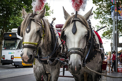 Horse-drawn carriage, Melbourne CBD