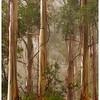 Mountain Ash, Alfred Nicholas Gardens