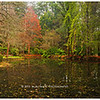 Alfred Nicholas Gardens<br /> Dandenong Ranges