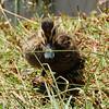Duckling<br /> <br /> Kacsa-baba