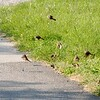 """Sparrows""<br /> <br /> ""Verebek"""