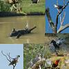 Sort of birds<br /> <br /> Madár-félék