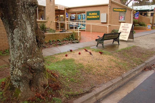 Parrots on the street<br /> <br /> Papagájok az utcán