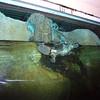 Platypus<br /> <br /> Kacsacsőrü emlős