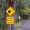 Lyrebird crossing<br /> <br /> Lantfarkú madár tábla