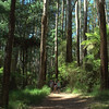 Sherbrooke Forest<br /> <br /> Sherbrooke-i erdő