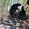 Memories of bushfire<br /> <br /> Az erdőtűz nyomai