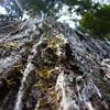 Tree trunk<br /> <br /> Fatörzs