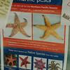 Poster which asks to collect pests found in the sea<br /> <br /> Káros állatok gyűjtésére felhívó plakát
