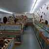 Shell museum<br /> <br /> Kagylómúzeum
