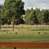 Napping kangaroos on a sports ground<br /> <br /> Henyélő kenguruk a sportpályán