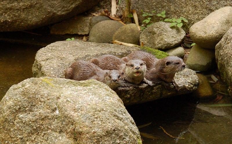 Otters<br /> <br /> Vidrák