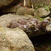 Otters<br /> <br /> Vidrák