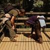 Viri and Denes are looking for worm to feed birds<br /> <br /> Viri és Dénes kukacokat keresnek a madarak számára