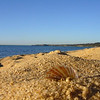 A beach on the way to Dromana<br /> <br /> A tengerpart útban Dromana felé