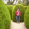 The Ashcombe Maze<br /> <br /> A Ashcombe sövénylabirintus