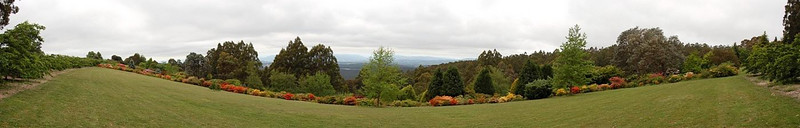 Panorama of Rhododendron Garden<br /> <br /> Rhododendron panoráma