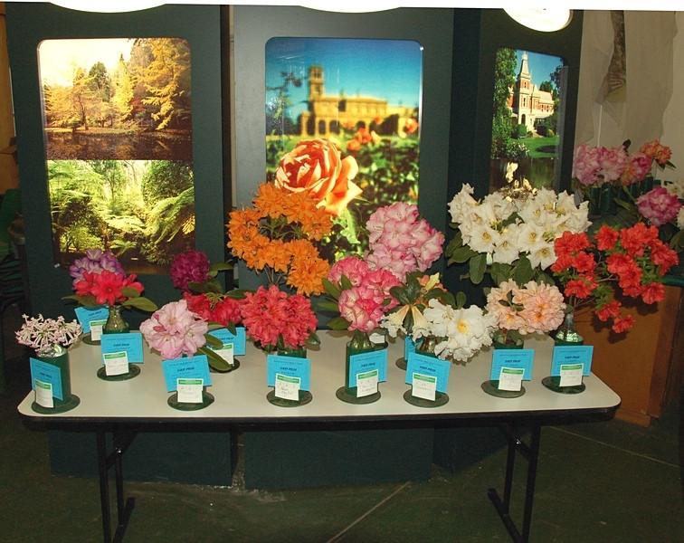 Rhododendron show<br /> <br /> Rhododendron kiállítás