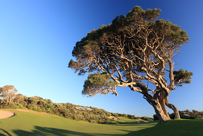 National_01OldTree_7229