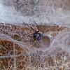 Spider<br /> <br /> Pók