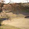 Portsea_17BackTrees_0580