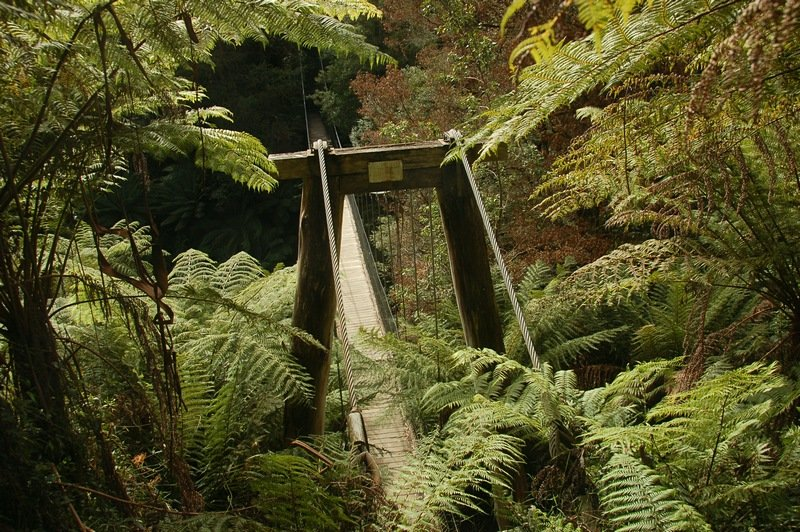Corrigan's Suspension Bridge (Tarra Bulga National Park)<br /> <br /> Corrigan-i függőhíd (Tarra Bulga Nemzeti Park)
