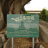 It is thought to be the largest specimen in Victoria<br /> <br /> A legnagyobb fikusz fa Viktóriában